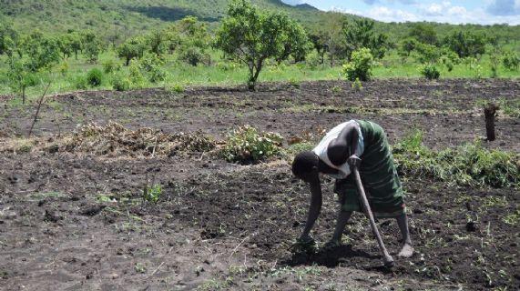 Fornitura di kit di sementi e strumenti agricoli e formazione a nuclei familiari vulnerabili