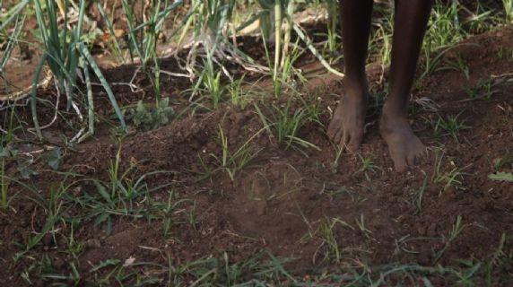 Realizzazione di scuole agro-pastorali sul campo a Kaabong (1 e 2)