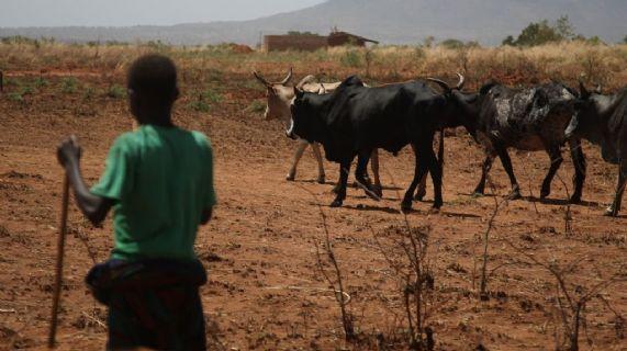 Riduzione del rischio di disastri per le comunità pastorali in Karamoja (Uganda) e in nord Pokot (Kenia) dpv