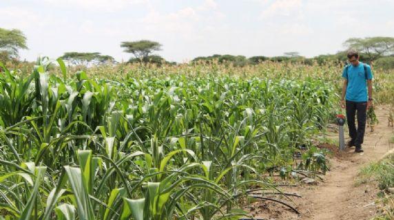 Sviluppare gli assetti produttivi in Karamoja per proteggere e migliorare le fonti di sostentamento delle popolazioni karimojong